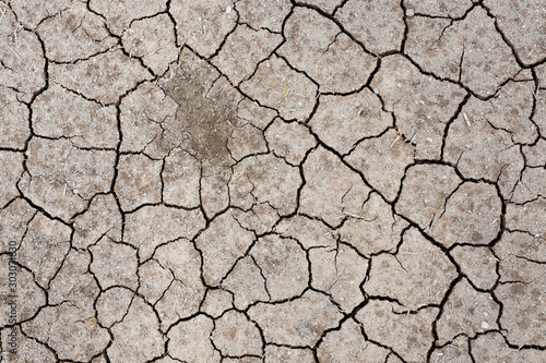 Stampa su Tela Dry cracked soil  by sun burn , arid , summer Thailand