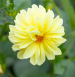 Leinwandbild Motiv Beautiful yellow flower in the garden