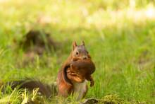 écureuil Avec Son Petit