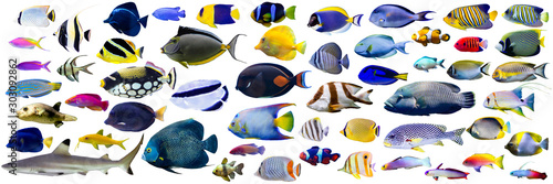 Photo Set of  beautiful Marine fish and shark on white isolated background such as ang