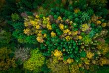 Wald Im Herbst Von Oben