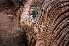 Elephants In The Kruger Nation...