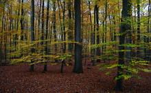 Wald,Mischwald,Laubwald,Woods,...