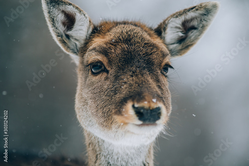 Fotobehang Hert Beautiful deer in winter.