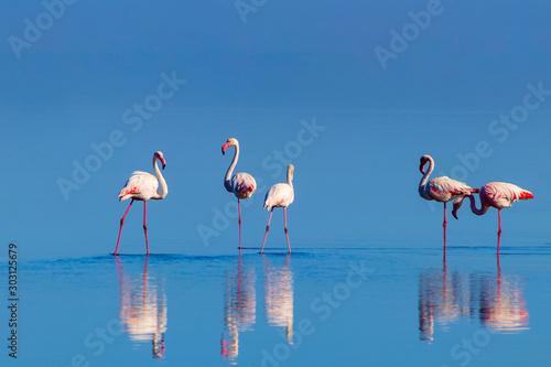 Photo sur Aluminium Flamingo Wild african birds. Group birds of pink african flamingos walking around the blue lagoon on a sunny day