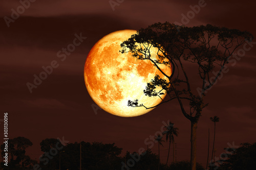 Photo full super buck moon on night red sky back silhouette tree