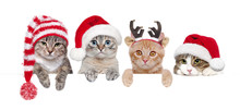 Cats In Christmas Hats Holding Blank Board