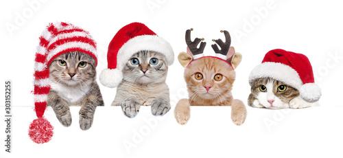 Fotografiet Cats in Christmas hats holding blank board