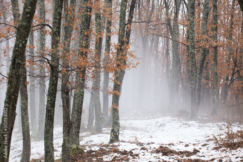 Misty forest with dense fog.