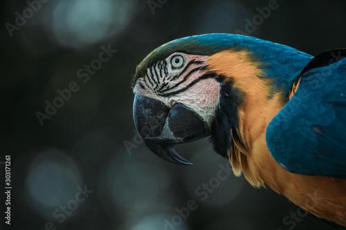 Deurstickers Papegaai Beautiful parrot head