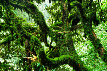 Fototapeta Natura Tropical jungles of Southeast Asia in august