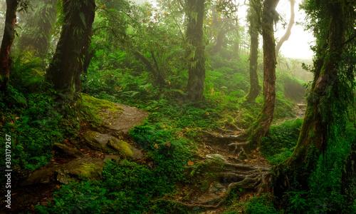 Spoed Fotobehang Weg in bos Tropical jungles of Southeast Asia in august