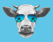 Portrait Of Cow With Sunglasse...