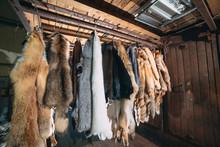 Animal Fur.  Foxes, Raccoon, W...