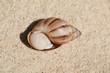 Schneckenhaus einer Meeresschnecke beherbergt das Schneckemhaus einer Landschnecke