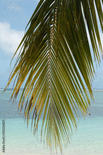 Foto-Schiebegardine Komplettsystem - palm tree on beach
