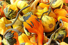 A Pile Of Autumn Gourds In Var...