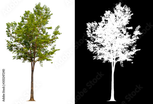 Foto isolated tree on white background with clipping path