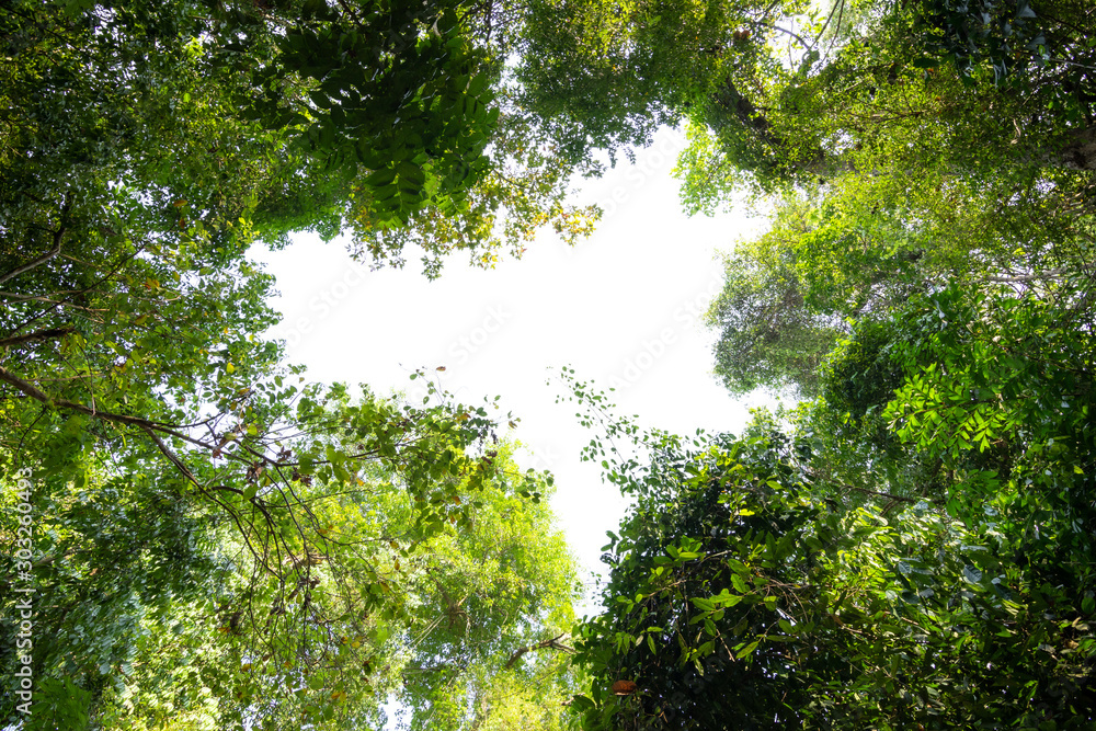 Low angle view of tropical tree with green leaves in rainforest.