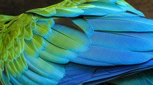 Close Up Of Colorful Bird Feat...