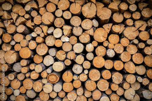 Cut log woods in round shape ready to use Tableau sur Toile