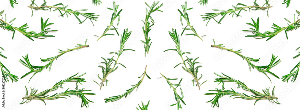 Fototapeta Wide background with pattern of green rosemary sprigs on white. Natural fresh herbs flat lay. Food creative widescreen backdrop