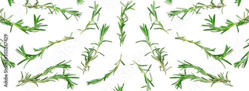Obraz Wide background with pattern of green rosemary sprigs on white. Natural fresh herbs flat lay. Food creative widescreen backdrop - fototapety do salonu