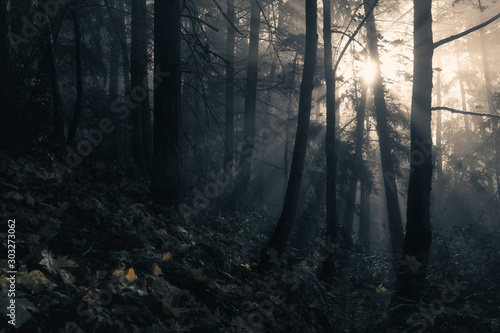 Ethereal Morning Light Pierces Through Misty Autumn Forest