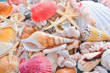 Many Beautiful Sea Shells And ...