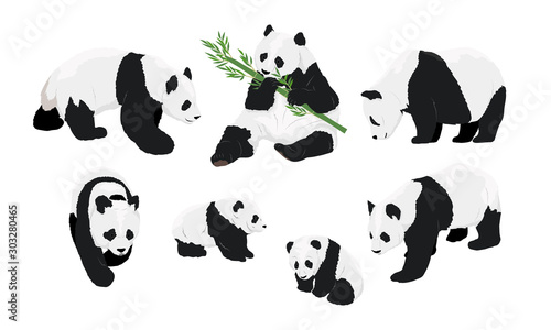 Set of realistic adult giant pandas bears and their cubs Canvas-taulu