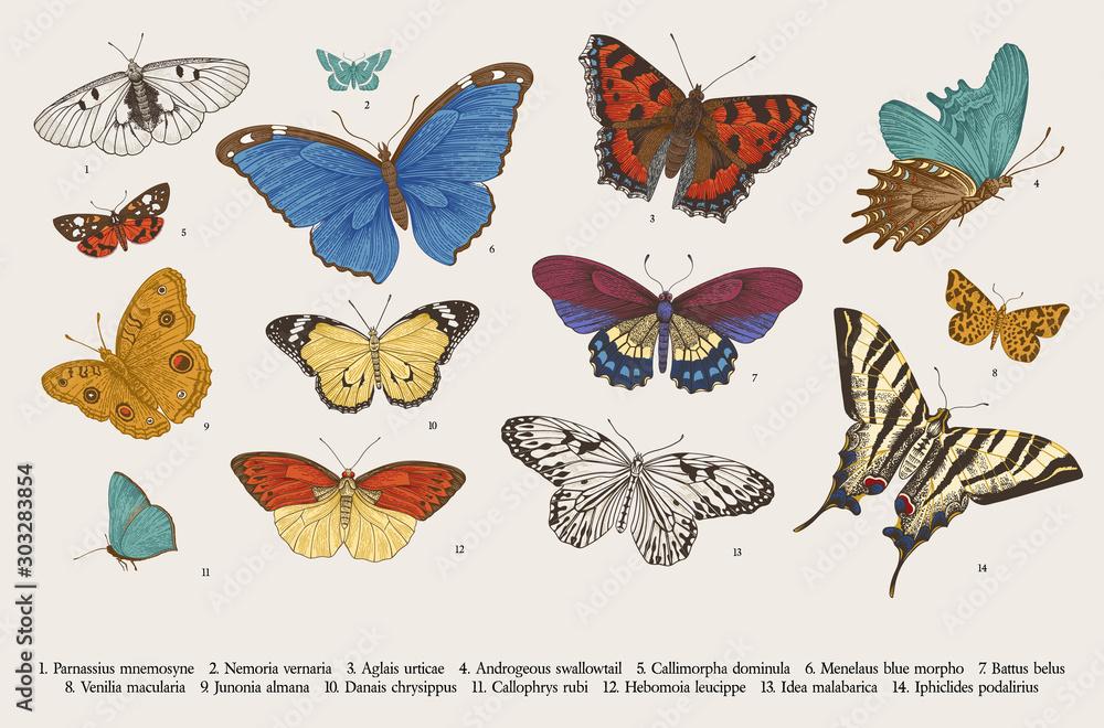 Fototapeta ..Butterflies. Set of elements for design. Vector vintage classic illustration. Colorful