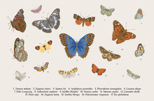 Butterflies. Set Of Elements For Design. Vector Vintage Classic Illustration. Colorful