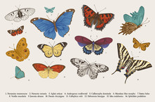 ..Butterflies. Set Of Elements...