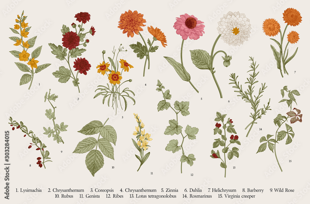 Fototapety, obrazy: Vintage vector botanical illustration. Set. Autumn flowers and twigs. Colorful