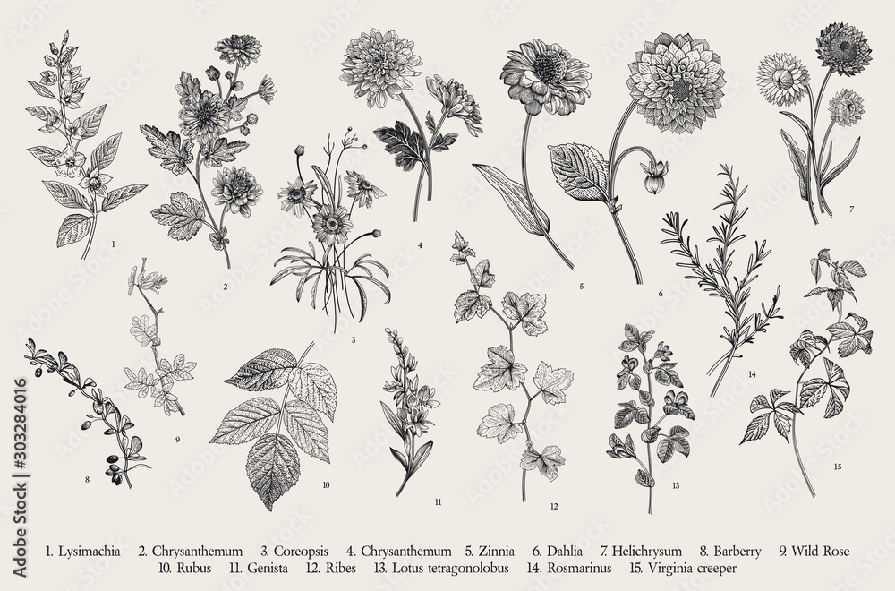 Fototapety, obrazy: Vintage vector botanical illustration. Set. Autumn flowers and twigs. Black and white