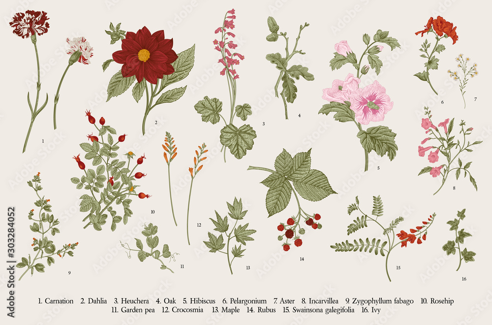 Fototapeta Vintage vector botanical illustration. Set. Autumn flowers. Colorful