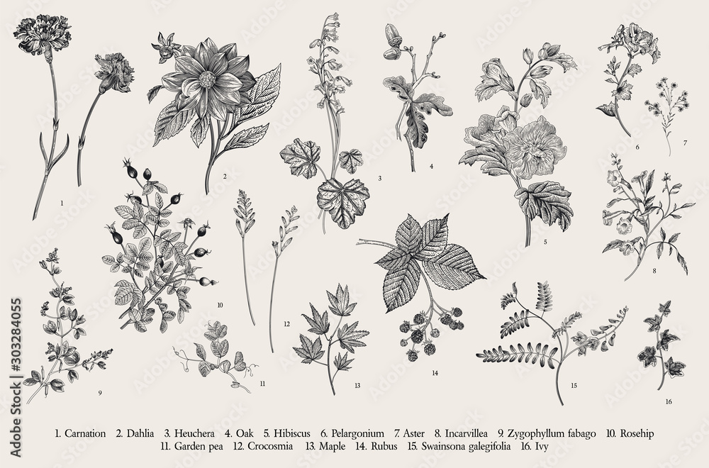 Fototapeta Vintage vector botanical illustration. Set. Autumn flowers. Black and white..