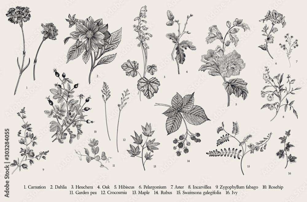 Vintage ilustracji botanicznych. Zestaw. Jesienne kwiaty. Czarny i biały.. <span>plik: #303284055 | autor: OlgaKorneeva</span>