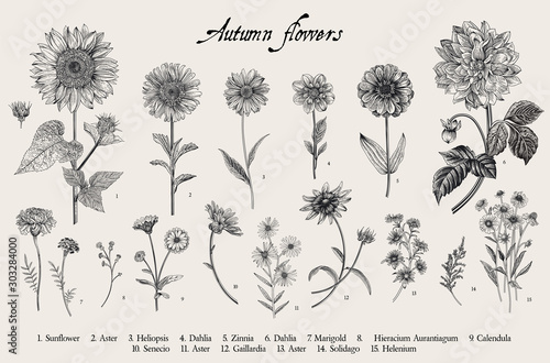Obraz na plátně  Vintage vector botanical illustration