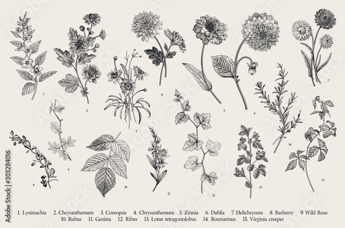 Vintage vector botanical illustration. Set. Autumn flowers and twigs. Black and white #303284016