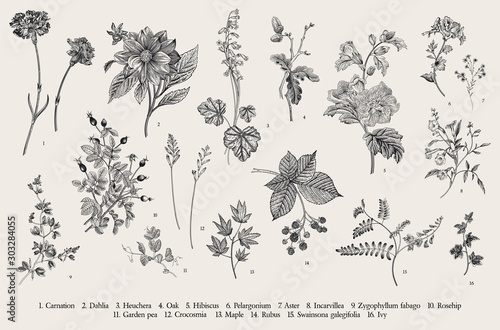 Vintage vector botanical illustration Fototapete
