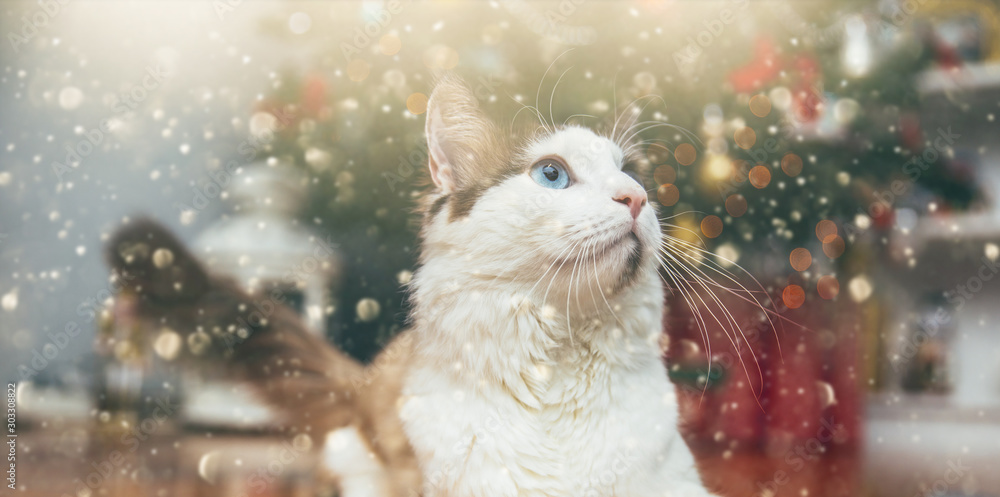 Fototapety, obrazy: Beautiful cat relaxing under Christmas tree. Holiday concept.