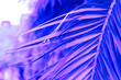 canvas print picture - close up palm leaves in trendy pink and blue neon colors
