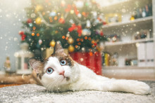 Beautiful Cat Relaxing Under Christmas Tree. Holiday Concept.