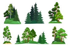 Forest Trees. Green Fir Tree, ...