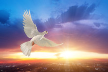 White Dove Flying On Sky In Be...