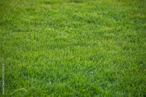 Green grass texture background. green - 303345676