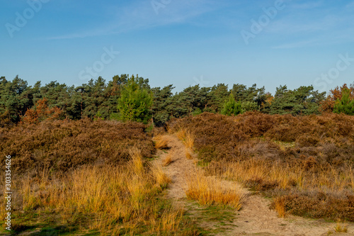 Foto op Canvas Australië moorland with road and blue sky in autumn