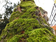 Tree Trunk Covered With Green ...