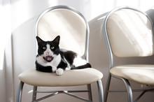 Black And White Cat Yawning